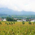 Feld bei Shaxi