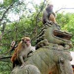Affen am Shibao-Berg