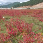 Rotes Feld