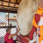 Mönch in Aktion