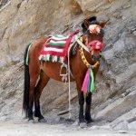 Ein Pferd als Alternative zum Aufstieg zu Fuß