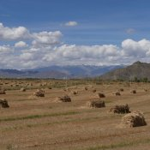 Getreidefelder - die Kornkammer Tibets