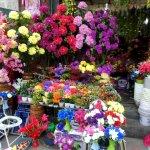 Blumenfreude mitten in der Stadt