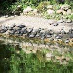Im Tempel-Park Schildkröten ohne Ende