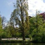 Baum an der Schlossbrücke