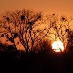 Sonnenuntergang über den Hofwiesen, 2011