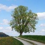 Baum bei Kirchdorf, Schweiz 2017